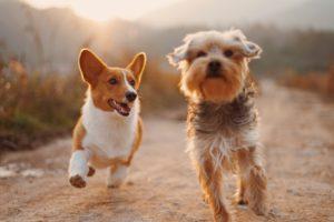 Asilo per cani Monza